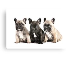 Puppy Pals  Canvas Print