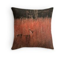 WHITETAIL BUCK Throw Pillow
