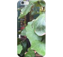 NYC, Vines in the Village iPhone Case/Skin