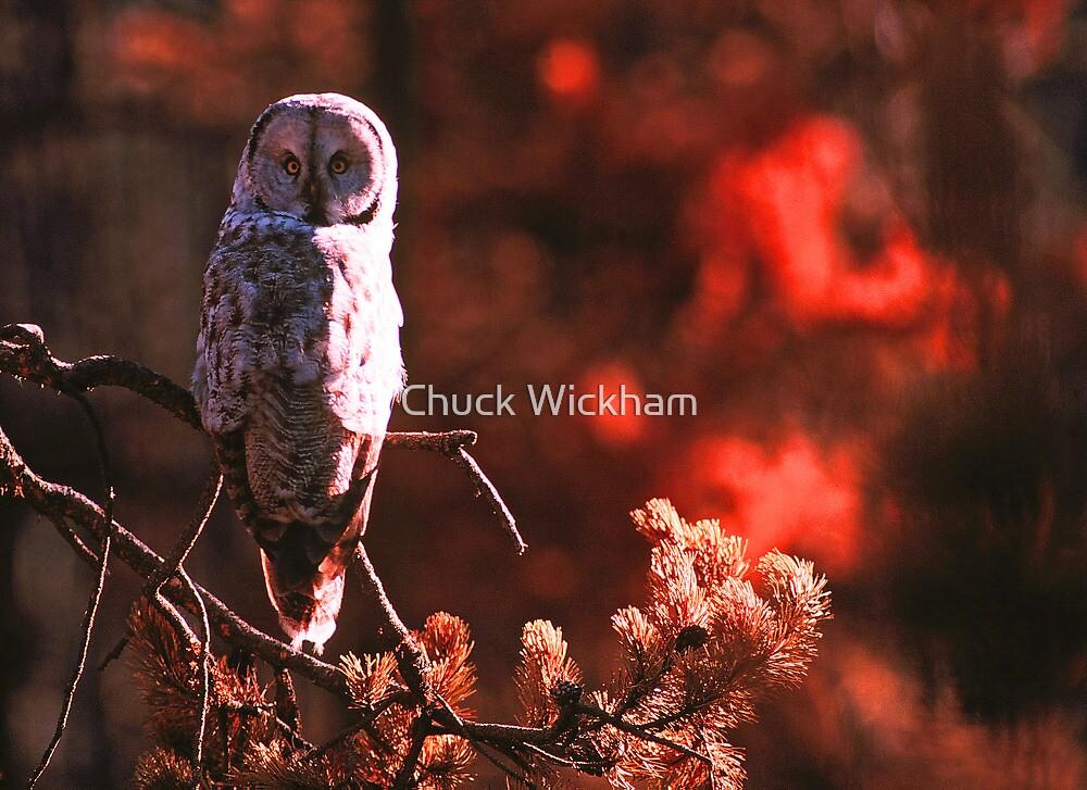 GREAT GREY OWL by Chuck Wickham