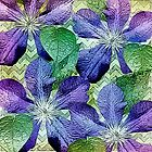 Purple Climbing Clematis by Darlene Lankford Honeycutt