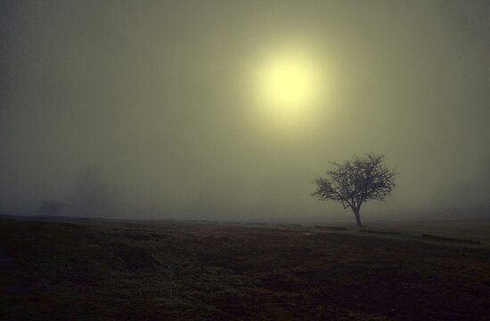 the fog at knole park by brett watson