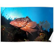 Along the Wall With Mr. Grouper Poster