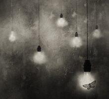 animaly #11 by Krzysztof Wladyka