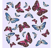 Flutter Byes Photographic Print