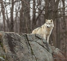 On the ledge by Josef Pittner