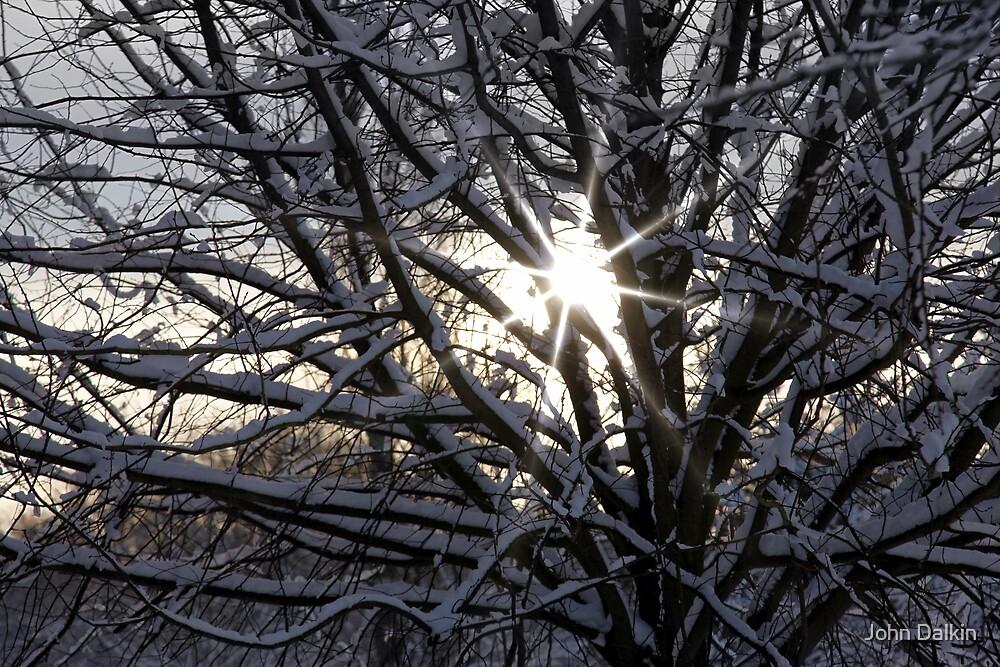 Weak Winter Sunshine by John Dalkin