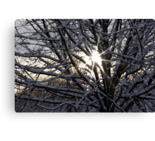 Weak Winter Sunshine Canvas Print