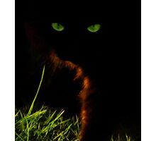 Killer kitten Photographic Print