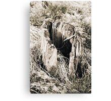 Hollow Tree Stump  VRS2 Canvas Print