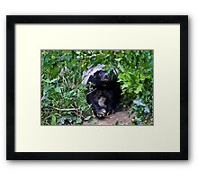 Coming through the undergrowth Framed Print