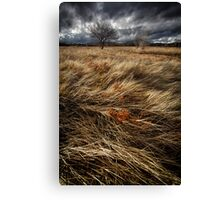 Bluster Canvas Print