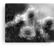 Daisy Flowers In Black And White Canvas Print