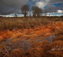 Marsh Melt by Bob Larson