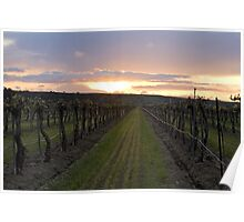 Vineyard Aglow Poster
