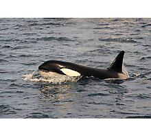 Orca Photographic Print