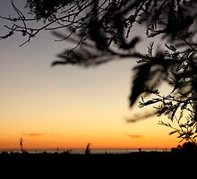 Silhouetted Leaves by Andrea  Muzzini