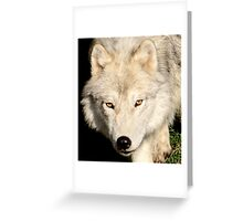 Face of a Wolf Greeting Card