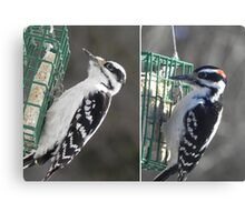 Female and Male Downy Woodpeckers Canvas Print