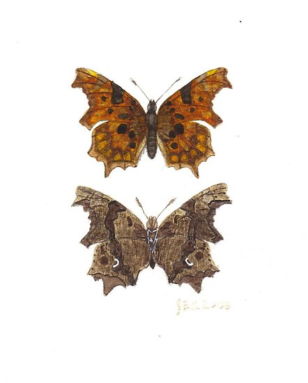 Comma or White C Butterfly. by JamesAlden