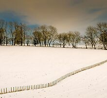 Snowy field by JEZ22