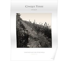 Vineyards and Dry Stone Wall Poster