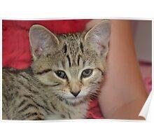 Ella the cat :) Poster