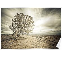 Windtree Poster
