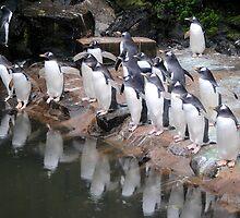 Gentoo Penguins by Dorothy Thomson