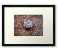 Snail House  VRS2 Framed Print