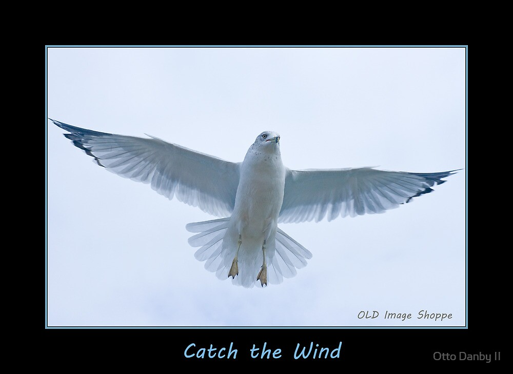 Catch the Wind by Otto Danby II