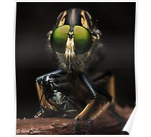 'The Robberfly' Poster