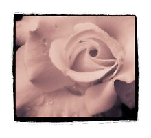 Dreamy Warm Rose by gloriart