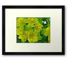 Yellow levity Framed Print