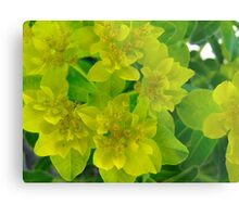 Yellow levity Metal Print