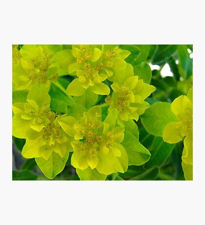 Yellow levity Photographic Print