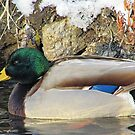 Greenhead by Greg Belfrage