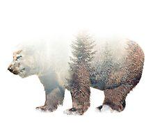 Brown Bear Double Exposure Photographic Print