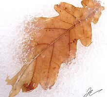 Frozen leaf by Jonathan Evans