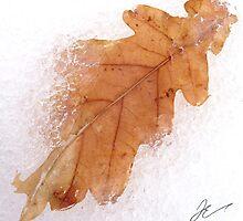 Frozen leaf by Jonathan Evans