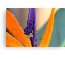 Paradise for Ants Canvas Print