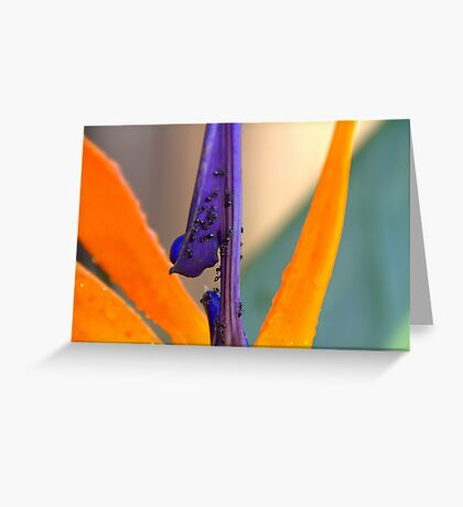Paradise for Ants Greeting Card
