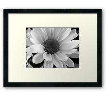 Daisy in B&W    ^ Framed Print
