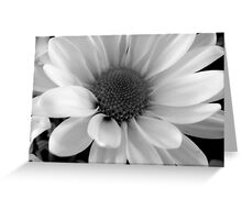 Daisy in B&W    ^ Greeting Card