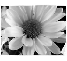 Daisy in B&W    ^ Poster