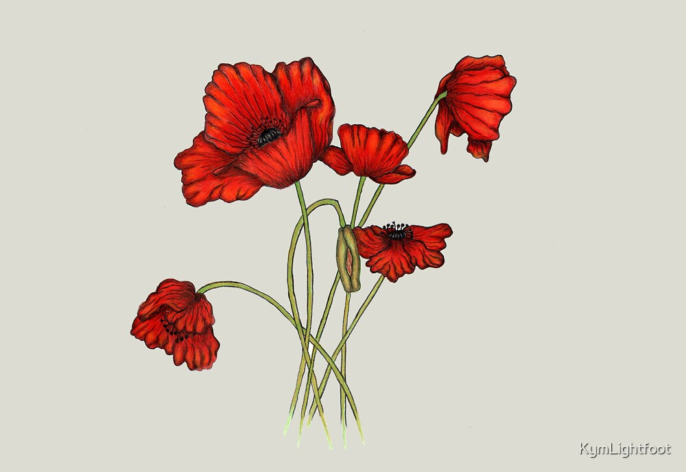 Poppies by KymLightfoot