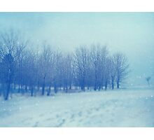 Blue Woodland Photographic Print