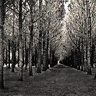 Chincoteague Trees by Matthew Rubel