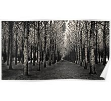 Chincoteague Trees Poster