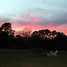 Colorful Sky Above The Trees by Cynthia48